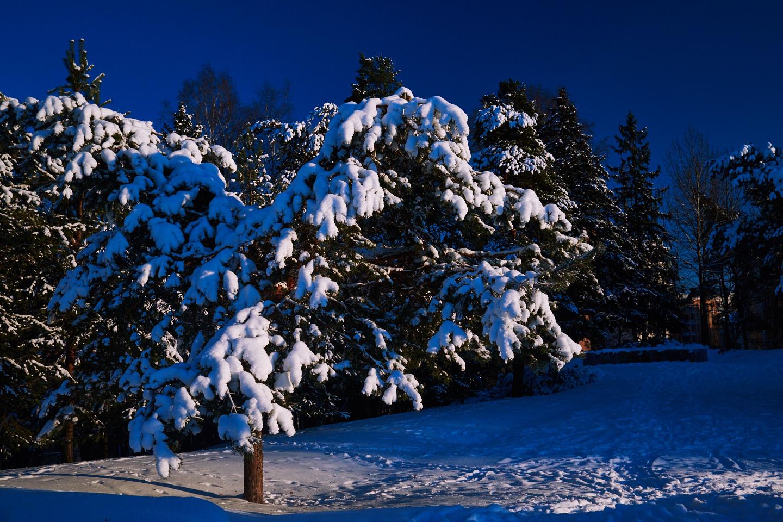 Talvinen puu Talissa