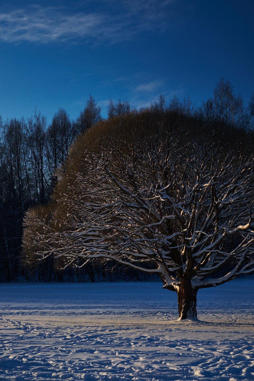 Talvimaisema Talin golfkentällä